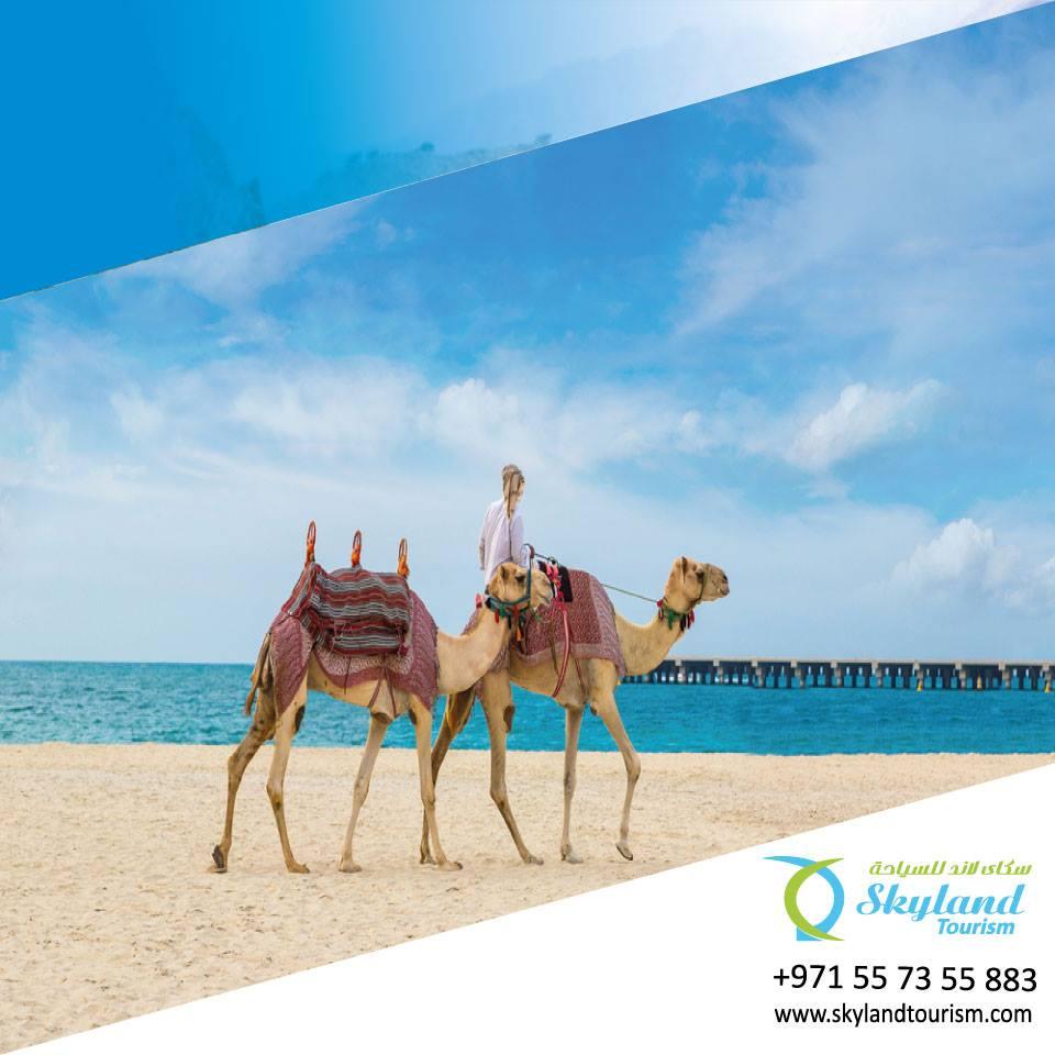 Dubai Best Desert Safari with very comfortable Rate - Desert Safari Camel Ride